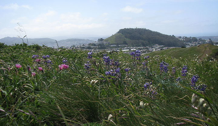 Image:Twin-peaks-and-mt-davidson-w-flowers 1556.jpg