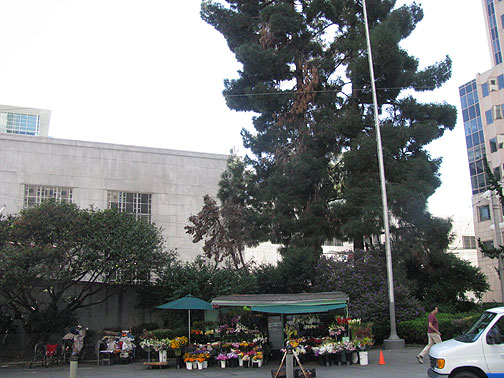 Flower-stand-and-right-side-park 2298.jpg