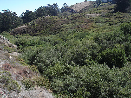 Glen-canyon-wooded-overview7156.jpg