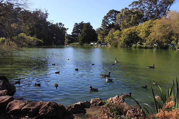 Stow-lake-w-birds 4500.jpg