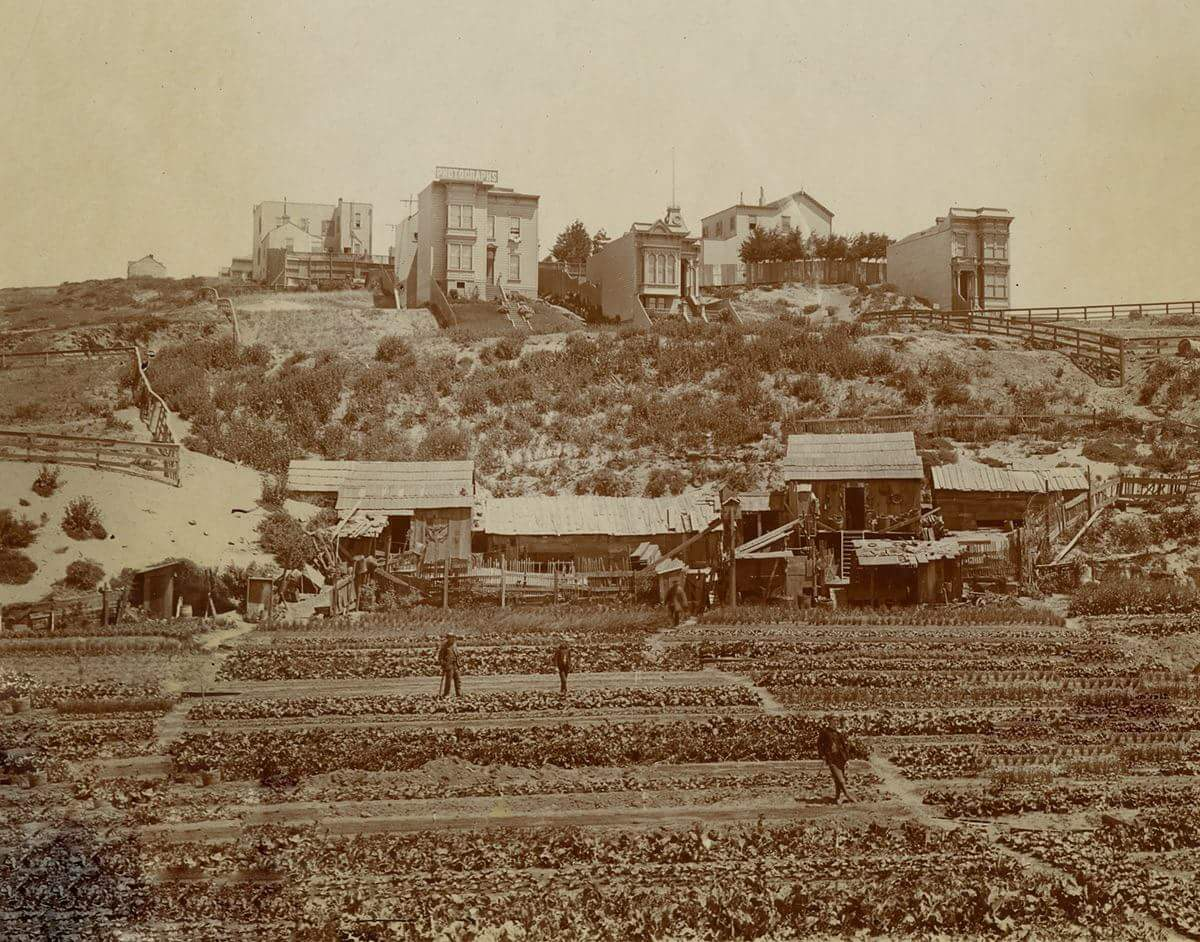 Chinese vegetable gardens in Cow Hollow c. 1890s.jpg