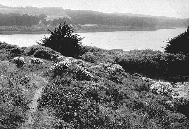 File:Wildflowers-at-lake-merced-1920s.jpg