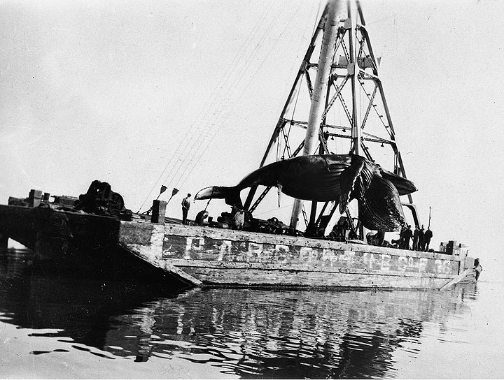 the largest whaling port on the west coast  1880s
