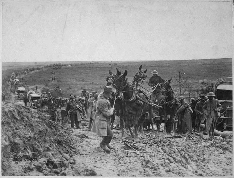 File:Mules WWI St. Mihiel France.jpg