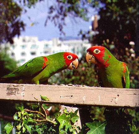 Parrot bird essay