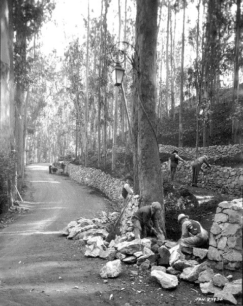 Jan-8-1934-workers-fix-retaining-wall-at-Stern-Grove.jpg