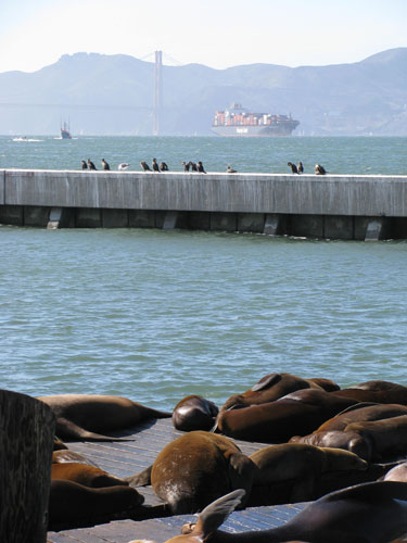 Sea-lions-and-ship.jpg