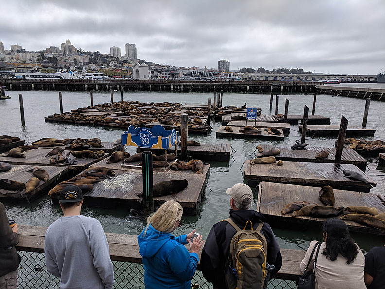 File:Sea-lions-view-point 20180513 150839.jpg