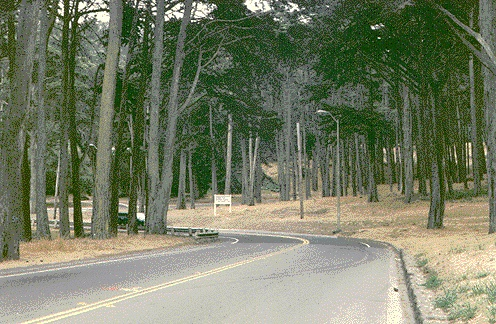 Presidio$presidio-forest-photo.jpg