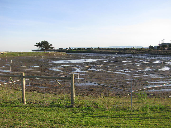 Image:Yosemite-slough-wetland-restoration-low-tide 1408.jpg