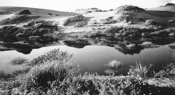 1910 Willard Worden inter-dune-pond.jpg