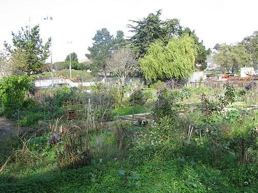 Potrero-del-sol-garden 5674.jpg