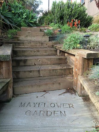 Mayflower-garden-steps-and-plants-jan-2018.jpg