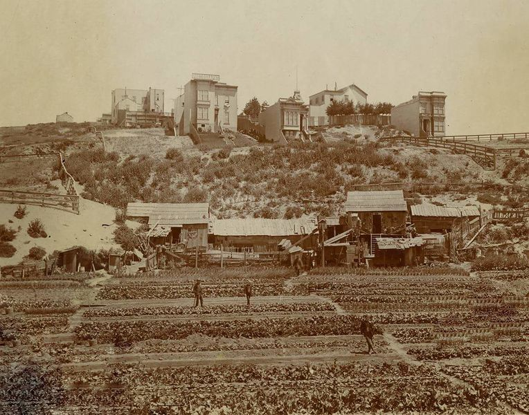 File:Chinese vegetable gardens in Cow Hollow c. 1890s.jpg