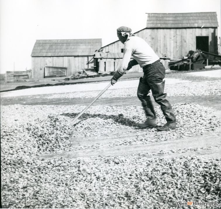 Chinese shrimper sweeping shrimp c 1910 wnp4.1291.jpg